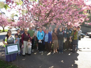 Sunnyside Cherry Walk, April 13, 2014.